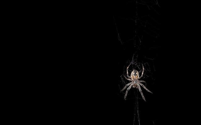 Black-Spider-Wallpaper-Hd-15