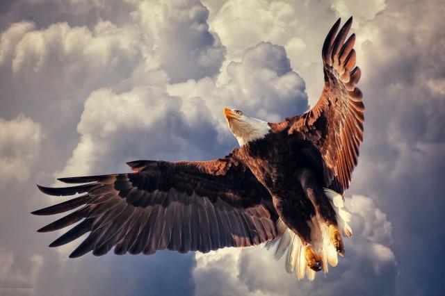 birds-majestic-eagle-american-raptor-clouds-sky-nature-bald-photo-gallery